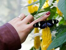 Woman with butterfly on finger