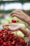 Woman buying cherries at the market Royalty Free Stock Photography