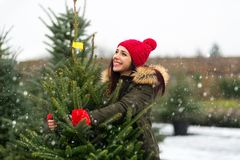 Woman buying Christmas tree Royalty Free Stock Images