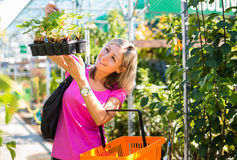 Woman buying flowers at a garden center Royalty Free Stock Images