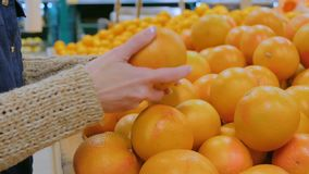 Woman buying fresh grapefruits at grocery store. Woman buying fresh citrus fruits - grapefruits at supermarket. Close up shot of woman hands. Consumerism, sale stock footage