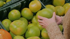 Woman buying fresh exotic citrus fruits at grocery store. Woman buying fresh exotic citrus fruits - sweetie, sweety, pomelo at supermarket. Close up shot of stock video footage