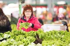 Woman buying lettuce at market place Royalty Free Stock Photography