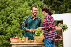 Woman buying organic vegetables from man Stock Images