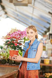 Woman buying poinsettia in nursery Royalty Free Stock Photos