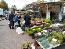 Woman buying seasonal flowers on a Belgian market. Royalty Free Stock Photography