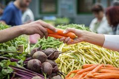 Woman buying vegetables on the market Stock Image