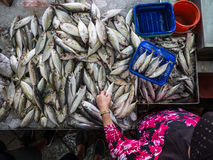 Woman buys fish in a wet market. A woman in a brightly coloured top carefully selects from a pile of grey fish in a wet market in Penang, Malaysia Stock Photos