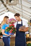 Woman buys plant in the garden center. Woman buys Eliator begonias in the garden center at a florist royalty free stock image