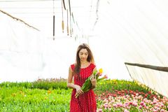 The woman buys the tulips Royalty Free Stock Images