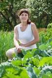 Woman  in  cabbage plant Stock Photography