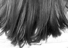 Woman& x27; cabelo de s no sol em preto e branco Foto de Stock