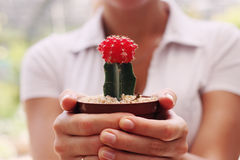 Woman with cactus Stock Photo