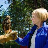 Woman and captive falcon Royalty Free Stock Image