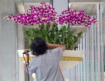 A woman cares about flowers in a large flower pot. Watering flowers in the airport hall royalty free stock images