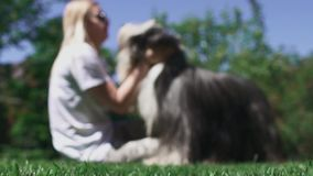 Woman caress her dog sitting on grass. Shooting is defocused and image is blur. Time spending with favourite pet stock video footage