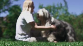 Woman caress her dog sitting on grass. Shooting is defocused and image is blur. Time spending with favourite pet stock video