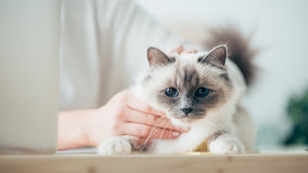 Woman caressing her beautiful cat Stock Photography