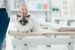 Woman caressing her lovely cat Stock Photos