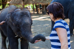 A woman caressing a young elephant Royalty Free Stock Photo