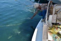 Woman and caretta sea turtle Royalty Free Stock Image