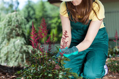 Woman caring about flowers Stock Images