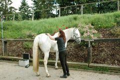 A woman caring for a horse. royalty free stock images