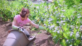 Woman caring for plants in the garden stock footage
