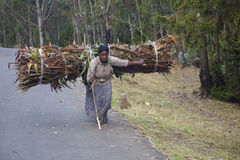 Woman carries firewood Stock Image