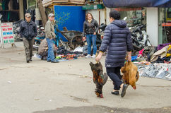 Woman carries three large roosters purchased at an open market in Vietnam Royalty Free Stock Image