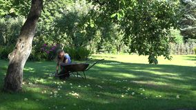 Woman carry barrow and gather windfall fruits to it under apple tree. 4K. Woman carry rusty barrow and gather windfall fruits to it under apple tree in garden stock video