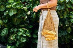 Woman Carry Fresh Sweet Corn in Reusable Net Bag. Summer Agriculture Harvest on Green Leaf Background. Yellow Whole Maize Ear Healthy Organic Grain Nutrition stock photos
