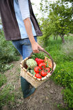 Woman carrying basket of freshly harvested vegetables Royalty Free Stock Photos