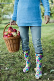 Woman carrying basket full of apples Royalty Free Stock Photos
