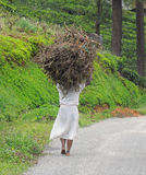 Woman carrying brushwood Royalty Free Stock Images