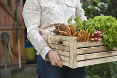 Woman Carrying Crate Full Of Freshly Harvested Vegetables Royalty Free Stock Photo