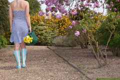 Woman carrying daffodils in a spring garden Royalty Free Stock Images