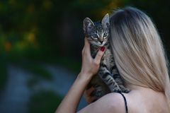 Woman Carrying Tabby Kitten royalty free stock photography