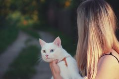Woman Carrying White Cat royalty free stock photo