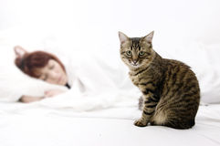 Woman with cat. Tabby cat sitting near a sleeping woman Royalty Free Stock Photos