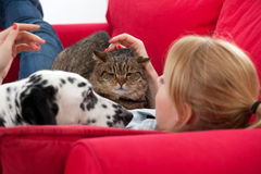 Woman with  cat and dalmatian dog Royalty Free Stock Photos