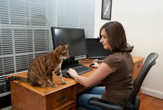Woman and cats at computer desk Stock Images