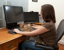 Woman and cats at computer desk Royalty Free Stock Image