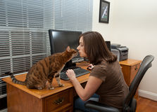 Woman and cats at computer desk. Young woman in home office with two monitors and keyboard on leather desk with kitten sitting on desk Royalty Free Stock Photography