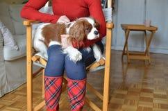 Woman and Cavalier Spaniel Stock Photos