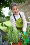 Woman changing pots of flowers in garden Royalty Free Stock Images