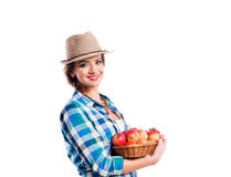 Woman, checked shirt holding basket with apples. Autumn harvest Stock Photo