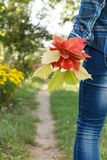 Woman in checkered shirt holding bouquet of red leaves. On rural road background Royalty Free Stock Images