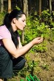 Woman checking first vine leaves in spring Royalty Free Stock Photography