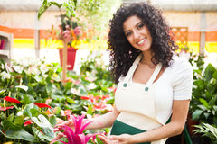 Woman checking flowers Royalty Free Stock Photos